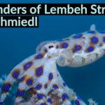 Presentatie The wonders of Lembeh Strait