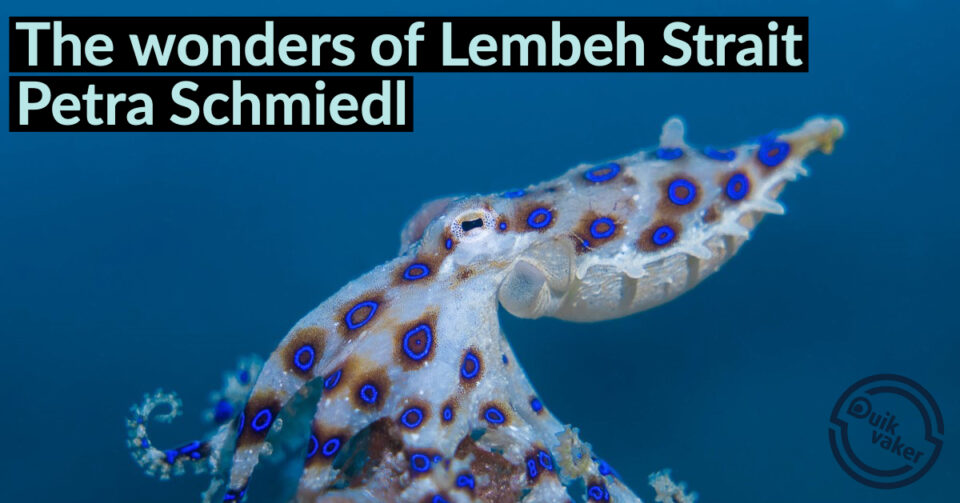 Presentatie The wonders of Lembeh Strait