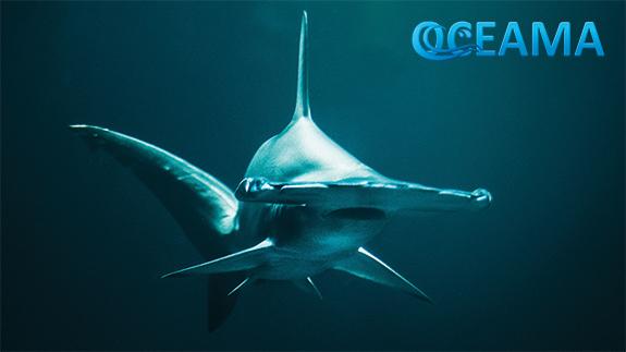 Oceama Shark